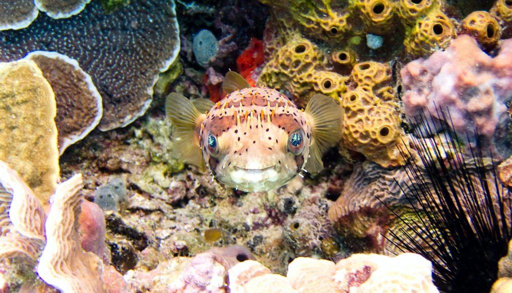 צלילה קוזומל יוקטן מקסיקו